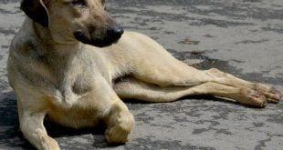 Montes Claros - Unimontes inicia trabalho de assistência a cães no campus e planeja campanha de adoção