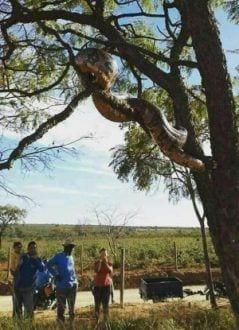 Cobra teria sido achada em estrada para povoado de Santa Rita