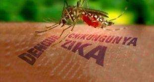 Saúde - É hora de reforçar as medidas caseiras no combate ao Aedes Aegypti