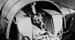 """Memória. Foto de arquivo do jornal soviético """"Pravda"""" mostra a cadela Laika a bordo do Sputnik"""