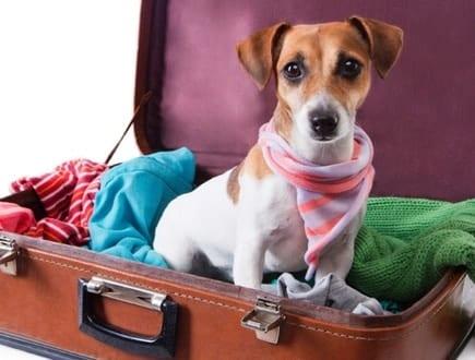 Saiba como viajar com seu animal de estimação