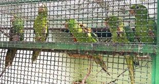 Recolhimento de animais feridos ou que precisam de algum tratamento faz parte de convênio no Vale do Rio Doce