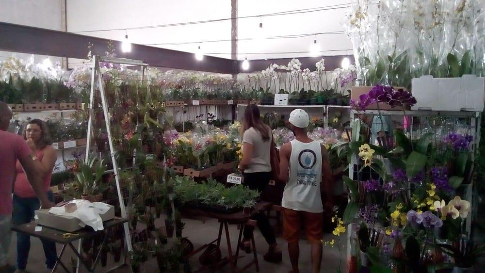 Montes Claros - Exposição de orquídeas em Montes Claros