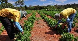 Montes Claros tem o segundo maior orçamento do Brasil para beneficiar os produtores familiares