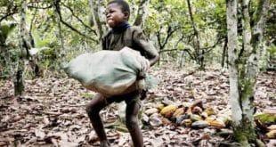 Criança que trabalha adoece e morre três vezes mais do que adultos