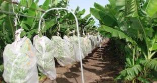 Perímetros irrigados do Jaíba e Gorutuba são beneficiados por projetos da Anater