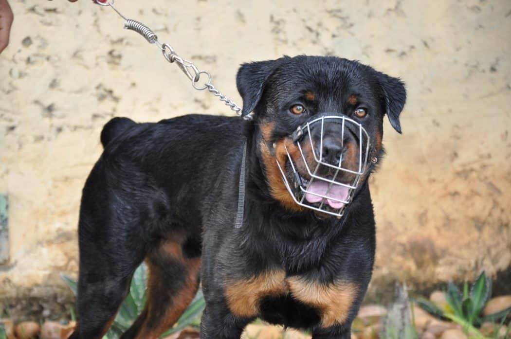 Prefeitura de Montes Claros impõe regras para a circulação de animais nos parques e praças