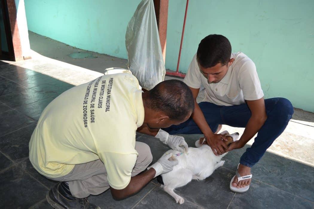 Campanha de Vacinação contra a Raiva chega à zona rural de Montes Claros neste domingo