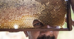 """Fazendo as contas, Gilberto Sarmento, 59, também abandonou o gado. """"O boi tem que dar vacina e alimentação. A abelha você põe no mato e não tem que ficar olhando. Não tem nem cerca para consertar. Não dá trabalho"""", afirma."""