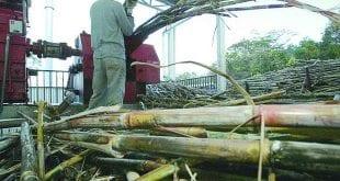 Em Minas, 90% da produção de cachaça é clandestina