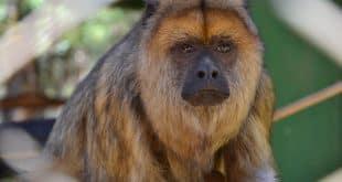 Zoológico de Montes Claros vai virar Centro de Triagem de Animais