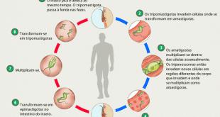Norte de Minas - Ação contra a doença de chagas é realizada em Espinosa e São Francisco