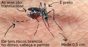 MG - Aedes aegypti faz 33 vítimas por hora em Minas Gerais