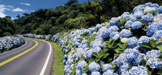 Serra Gaúcha se prepara para receber os turistas no inverno