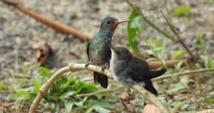 Porto Seguro terá o 2º Festival de Aves na semana da Mata Atlântica