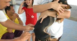 Montes Claros - Campanha de Vacinação Antirrábica acontecerá em agosto em Montes Claros