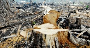 Norte de Minas - Operação Mata Atlântica Viva combate crimes ambientais no Norte de Minas