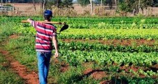 Norte de Minas - Japonvar e Ibiracatu recebem Seminário da Agricultura Familiar