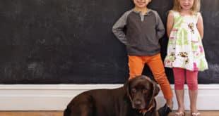 Tem criança em casa? Confira 7 raças de cães que convivem bem com os pequenos