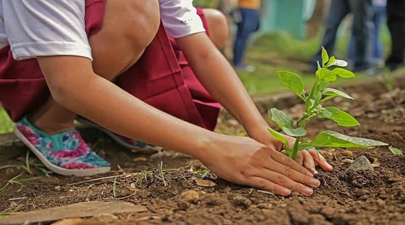 Montes Claros - Dia da Árvore será comemorado com plantio de mudas em Montes Claros