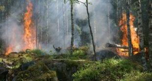 MG - Queimadas em Minas Gerais; Bombeiros atuam para combater chamas em todo o estado