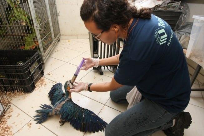 MG - Resgate de animais silvestres bate recorde em Minas Gerais