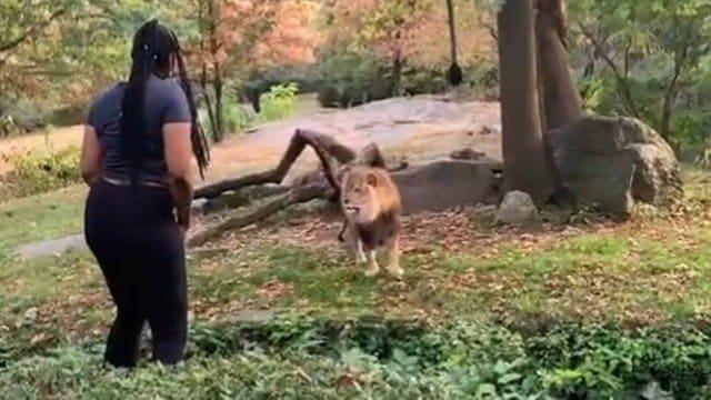 Mulher invade área de leões em Zoológico e ainda desafia polícia