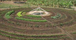 Horta circular. Foto Kellson Tolentino