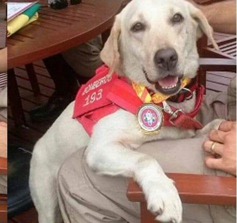MG - Cachorra que ajudou Bombeiros no resgate de vítimas em Brumadinho é adotada