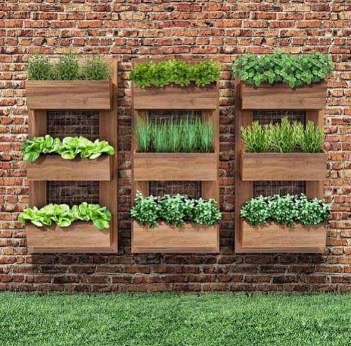 Nesse período de isolamento social, que tal fazer uma horta em casa?