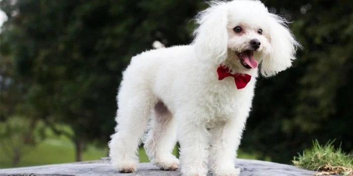 MG - Justiça condena homem que matou cachorro a pagar multa de R$ 7 mil por danos morais