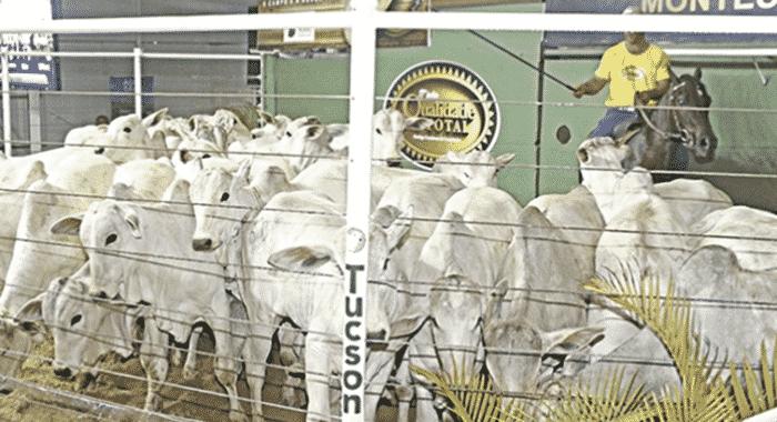 Norte de Minas - Sem Expomontes, Sociedade Rural realiza leilão on-line