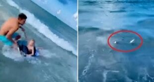 Policial salva criança de ataque de tubarão nos Estados Unidos