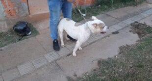 Após o ocorrido, o proprietário não quis mais ficar com o animal, que foilevado ao Centro de Zoonoses do município.