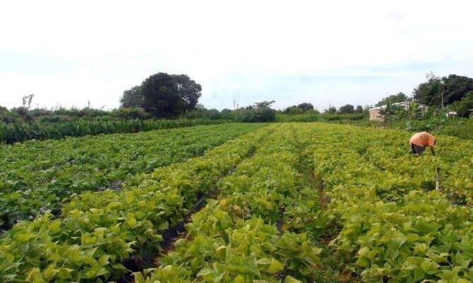 Agricultores brasileiros que utilizam tecnologia na produção rural já são mais de 80%, aponta pesquisa